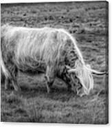 Windblown In Scotland Black And White Canvas Print