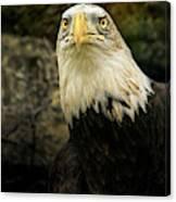 Winter Eagle Canvas Print