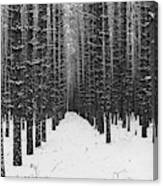 Winter Forest In Black And White Canvas Print