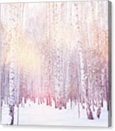 Winter Magic Birch Grove Canvas Print