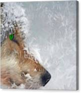 Wolf In The Snowstorm - Painting Canvas Print