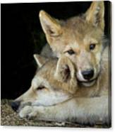 Wolf Pup Brothers Canvas Print