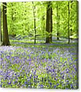 Wonderful Woodland Canvas Print