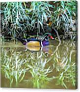 Wood Duck Reflection Canvas Print