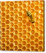 Working Bee On Honeycells Canvas Print