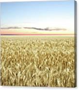 Xxl Wheat Field Twilight Canvas Print