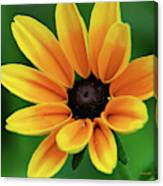 Yellow Flower Black Eyed Susan Canvas Print