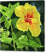 Yellow Hibiscus With Bright Green Leaves Canvas Print