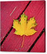 Yellow Maple Leaf Against A Red Deck Canvas Print