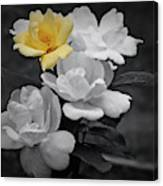 Yellow Rose Cluster Partial Color Canvas Print