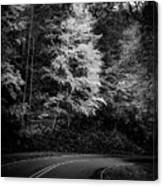 Yellow Tree In The Curve In Black And White Canvas Print