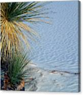Yucca Plant In Rippled Sand Dunes In White Sands National Monument, New Mexico - Newm500 00113 Canvas Print