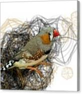 Z Is For Zebra Finch Canvas Print