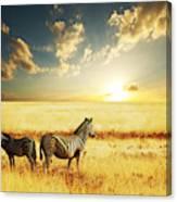 Zebras At Sunset Canvas Print