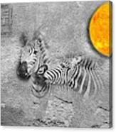 Zebras No 02 Canvas Print