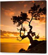 Zen Is A Tree On The Cliff Rocks And Canvas Print