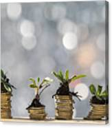 Heaps of coins of Euro with green natural plants it they are born, illuminated by the light of the sun Canvas Print