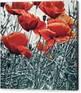 Lovely Poppy Field Panoramic View Photograph By Melanie Viola