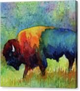 American Buffalo III Canvas Print