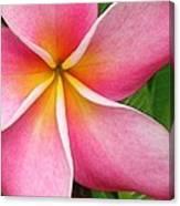 April Plumeria Canvas Print