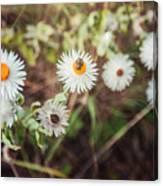 Beatle Flower Canvas Print