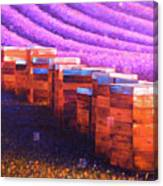 Beehives of Provence Canvas Print