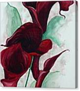 Black Callas Canvas Print