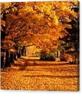 Blazing Autumn Oaks Canvas Print