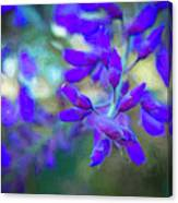 Wisteria Buds Dressed In Bold Colors Canvas Print
