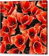 Bouquet of Red-Orange Tulips Canvas Print
