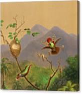 Brazilian Hummingbirds IIi Canvas Print