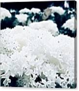 Close Up Of White Plant Canvas Print