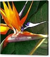 Crane Flower Canvas Print