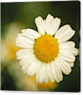 Daisy Close Up Too Canvas Print