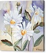 Daisy Days Canvas Print