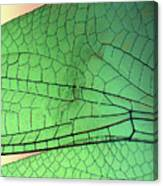 Dragonfly Wings 2 Canvas Print