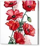 English Field Poppies. Canvas Print