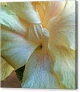 Evening Hibiscus Canvas Print