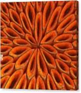 Face Mask Orange Canvas Print