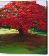Flamboyant Ablaze Canvas Print