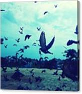 Flock Of Pigeons Against Sky Canvas Print