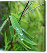 Forty Shades Of Green Canvas Print