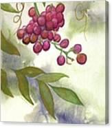 Grapes Divine Canvas Print