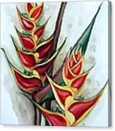 Heliconia Tropicana Trinidad Canvas Print