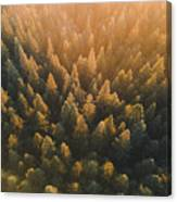 High Angle View Of Trees In Forest Canvas Print