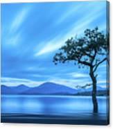 Lone tree Milarrochy Bay Canvas Print