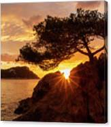 Lonely Tree At Sunrise On The Beach Of Fenals, Lloret De Mar Canvas Print