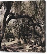 Magnolia Cemetery Canvas Print