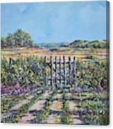 Mary's Field Canvas Print