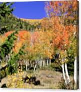 Mountain Top Aspens Canvas Print